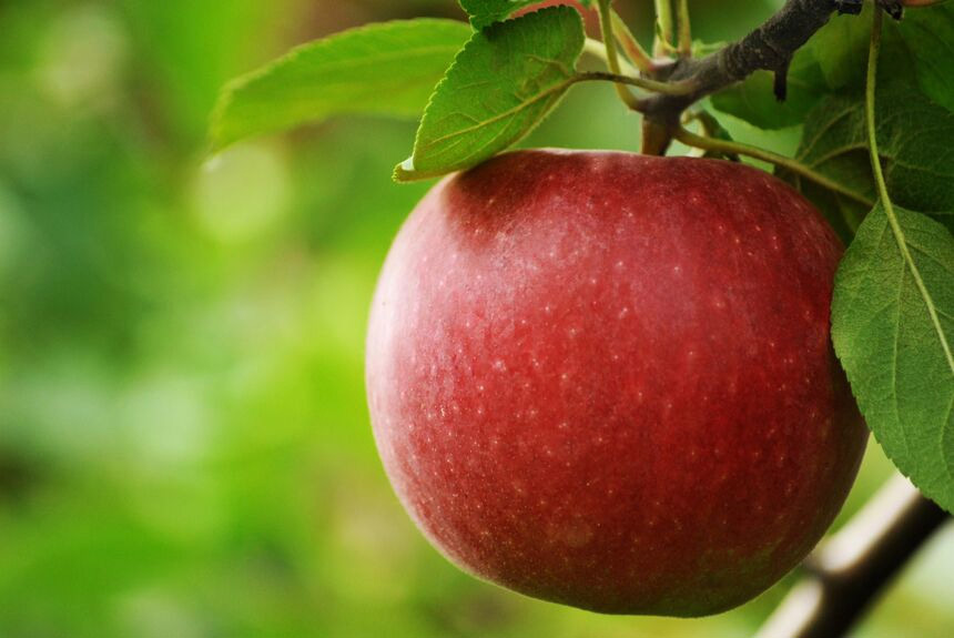 The Daily Crunch: Why we should be eating an apple a day